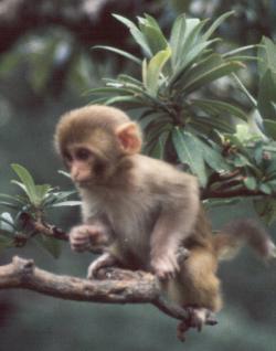 IMAGE(http://www.bougerolle.net/travel/baby_monkey_india.jpg)